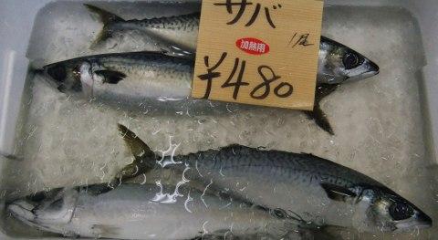 yobuko 035 (480x263)